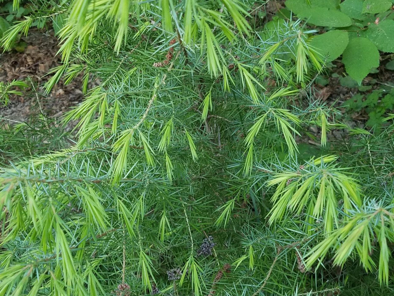 Pflanze12 Trumpf